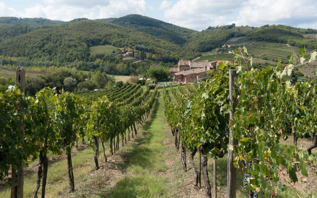 Tuscan wines and food, the best match