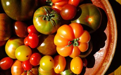 Italian tomatoes, a red and juicy love story